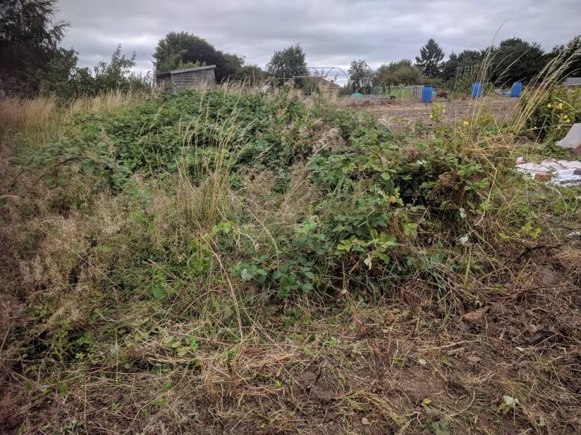 Planning a perennialgarden